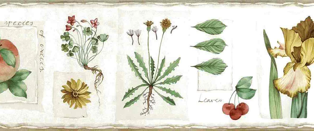 Botanical Vintage Wallpaper Border - Botanical Vintage Wallpaper Border Floral Fruit Cream Green