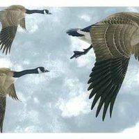 Geese Vintage Wallpaper Border, Glen Loates, Clouds, Sky, blue, gray, white