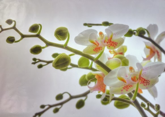 Floral Orchids Wall Mural