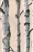 Birch tree trunks wallpaper