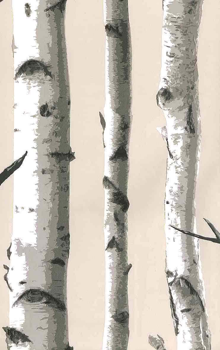 wallpaper birch trees, taupe, gray, black, white